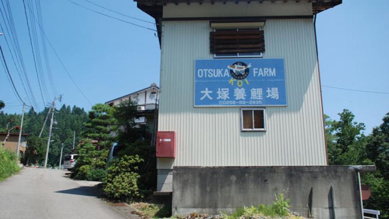 Japonské farmy: Otsuka Koi Farm